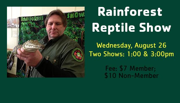 Rainforest Reptile web slide